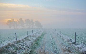 Texel Landschap 003 van Starworks Lien van der Star