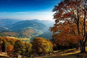 Belchen en automne