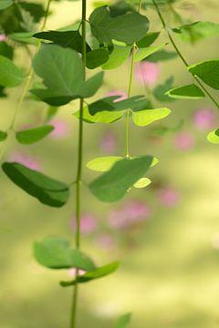 Groene takken en roze bloesem van Tot Kijk Fotografie: natuur aan de muur