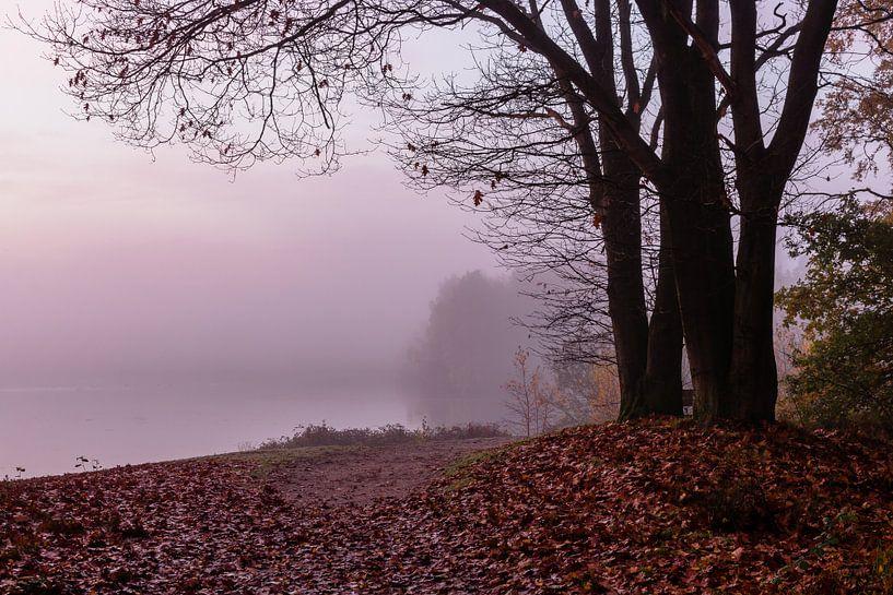 Misty Twilight Tree van William Mevissen