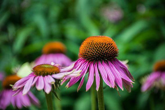 prachtige paarse bloem met oranje hart