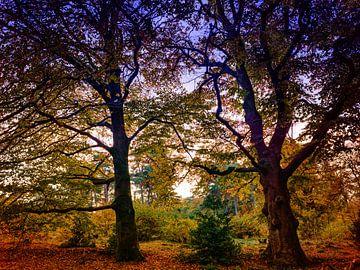 Kaapse Bos 4 van Henk Leijen