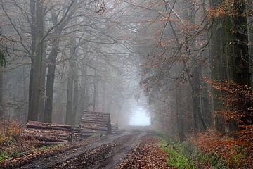 Atmosphärischer und bunter Waldweg von Paul Muntel