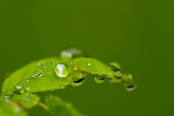 Wet leaf