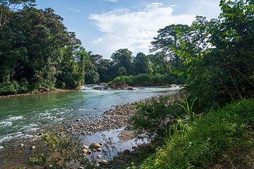De mooie Sarapiquí Rivier in het Tropisch regenwoud Selva Verde in Costa Rica van Mirjam Welleweerd