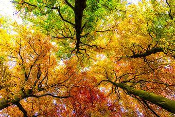 Autumn Colours sur Peter Vruggink
