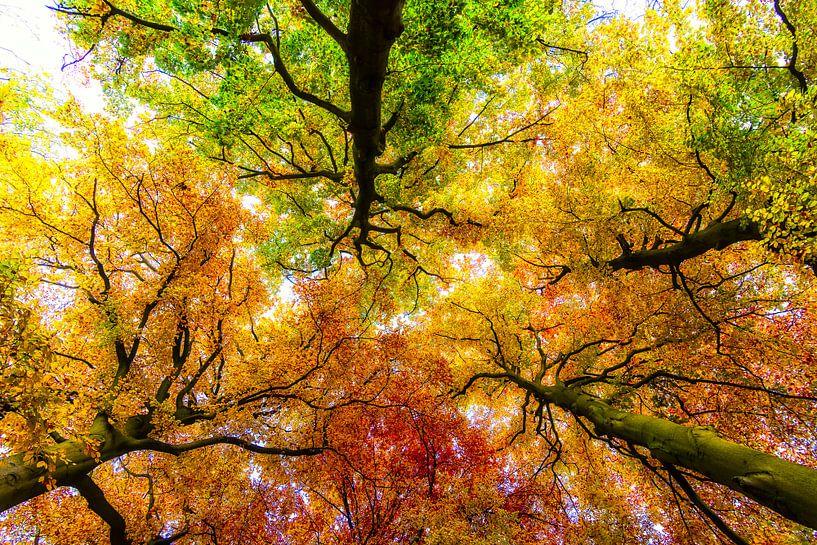 Herfstkleuren van Peter Vruggink