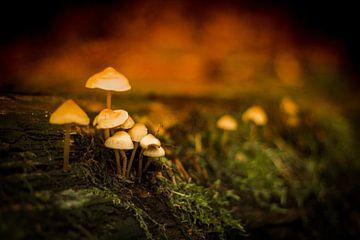 Mysterieuze paddenstoelen in het mos von Marloes Hoekema