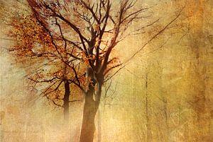 Autumn-Glow von