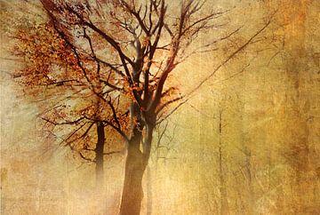 Autumn-Glow van Vera Kämpfe