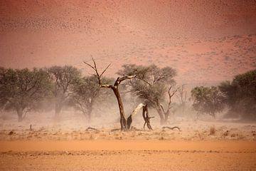 NAMIBIA ... through the storm I van