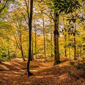 Herfst in het bos van Freek Rooze