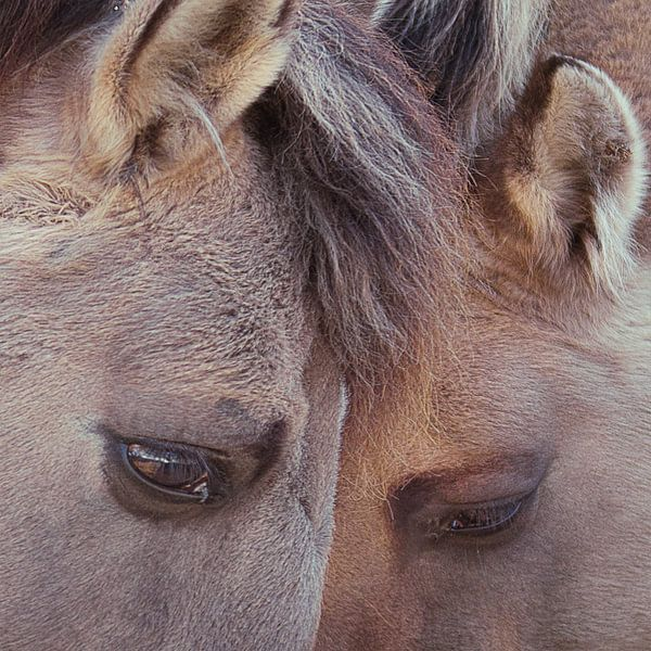 Twee paarden van Peter Mensink