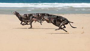 Rennen in viervoud