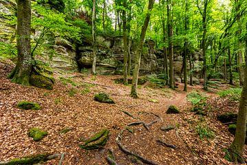 Mullerthal Trail III