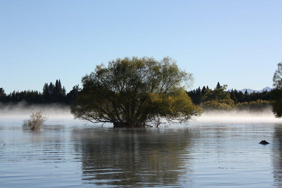 Tree in the lake van Paul Optenkamp
