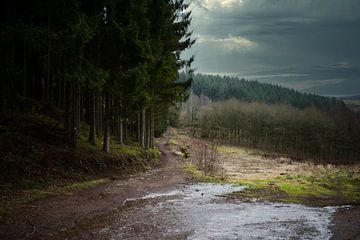 Hügellandschaft Ardennen von Tuur Wouters