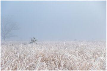 winterse sferen van Hetwie van der Putten
