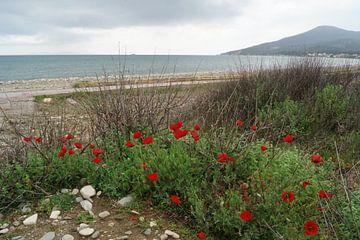 Mohnblumen am Strand von Patrick Ven
