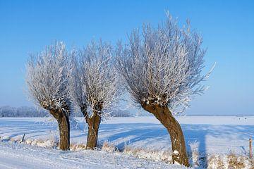 Knotwilg in de sneeuw van Marcel van der Voet