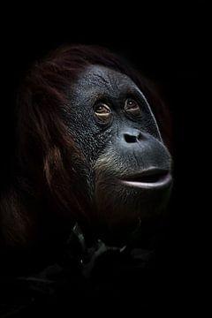 Dromen. Een geraffineerde verraste orang-oetan tegen een achtergrond van groen, een close-up gezicht van Michael Semenov
