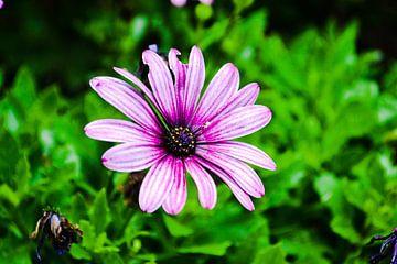 Blume von Xylia Wairy
