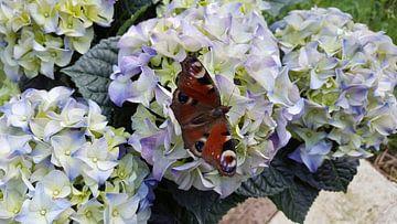 vlinder op een bloem van Jan-Julius van Asseldonk