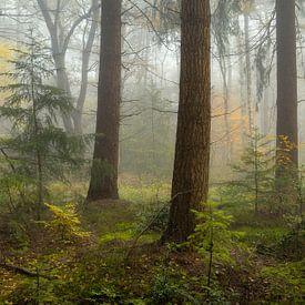 Brouillard dans la forêt d'automne sur Peter Bolman