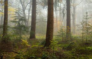 Mist in herfstbos van Peter Bolman