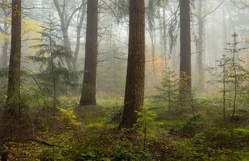 Nebel im Herbstwald von Peter Bolman