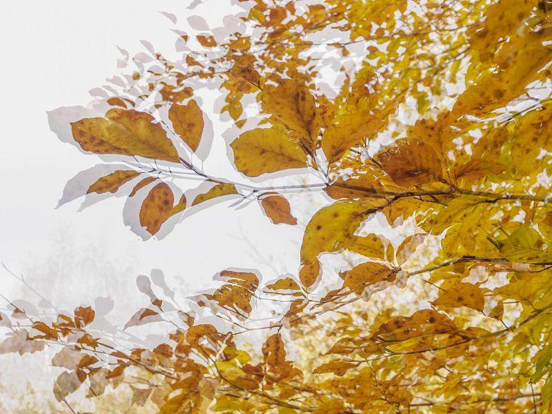 Autumn van Ellie Overgaauw