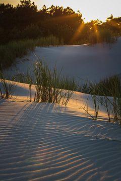 Schoorl-Dünen im Abendlicht von Jefra Creations