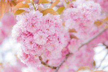 Prachtig roze van Daan van Oort