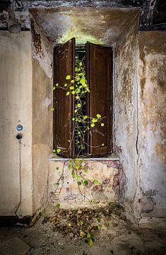 Fenêtre avec lierre vert sur Inge van den Brande