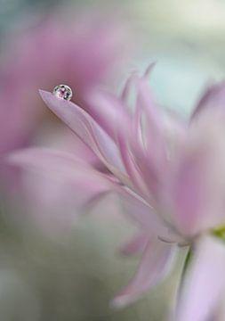 In roze verrukking, Heidi Westum van 1x
