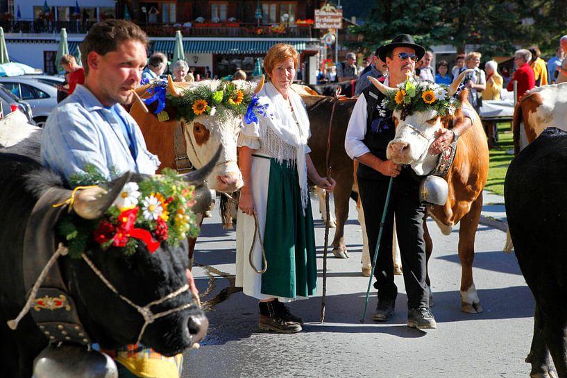 Walliser Kühe von Menno Boermans
