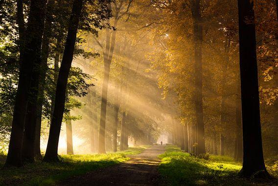 Magie in de herfst van Edwin Mooijaart