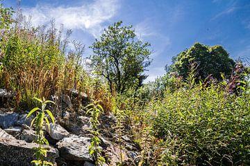 Landschap in de Ardennen 2 sur Thomas van der Willik