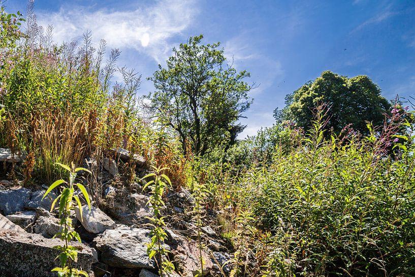Landschap in de Ardennen 2 van Thomas van der Willik
