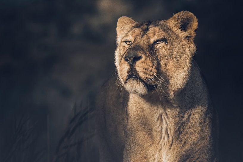 Leeuwin van Karin aan de muur
