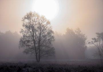 der Baum, die Sonne und der Nebel von Tania Perneel