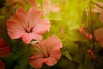Malve, Blumen von Marijke van Loon