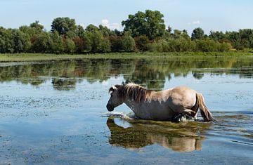 Blaawe kamer-zwemmend paard 04 von Cilia Brandts