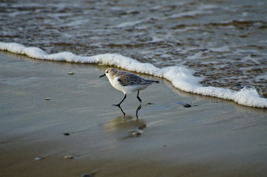 Strandloper van Ricardo Bouman | Fotografie