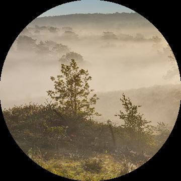 uitzicht over de brunssummerheide van Francois Debets