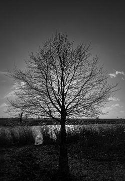 Silhouette von Marcel Pietersen