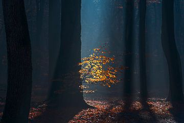Lichtstralen in het Speulderbos van Rick Kloekke