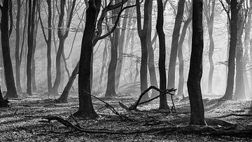 Sonnenharfen in einem nebligen Wald von Martin Winterman