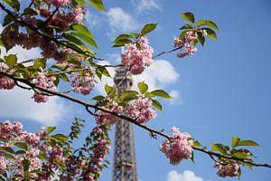 Paris in Bloom van Ingrid de Vos - Boom