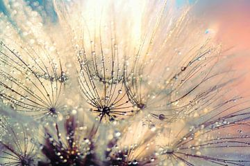 Paardenbloem mystiek - Mystical Dandelion von Julia Delgado